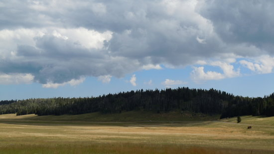 Kaibab National Forest: Rolling meadows