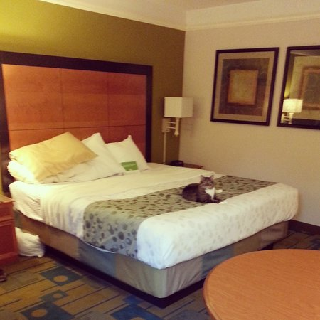 La Quinta Inn & Suites Greenville Haywood: Very comfy Simmons Beautyrest pillow top bed!