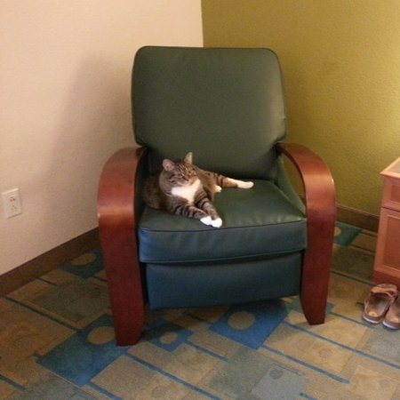 La Quinta Inn & Suites Greenville Haywood: Comfy recliner chair..pet friendly of course!