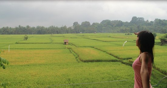 Green Field Hotel and Bungalows: Paddy field View from Bale Adat