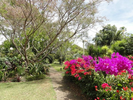Hotel Bougainvillea : part of the garden with Bougainvilleas