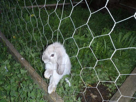 Foragers: Cute bunny