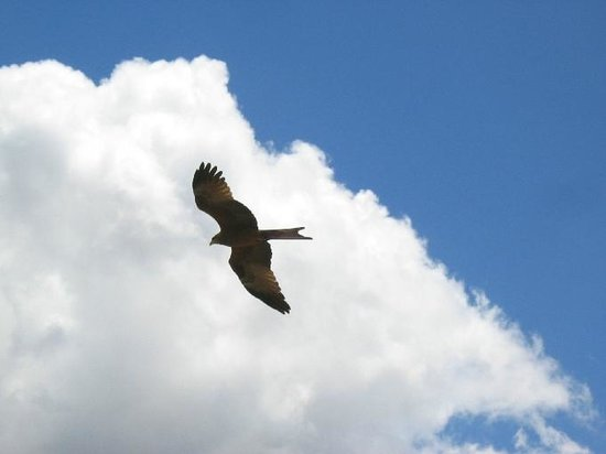 Ngorongoro Crater: bird of prey, possibly an eagle