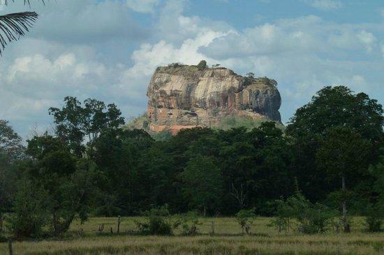 Paradise Inn : Aussicht vom Garten auf den Lion Rock