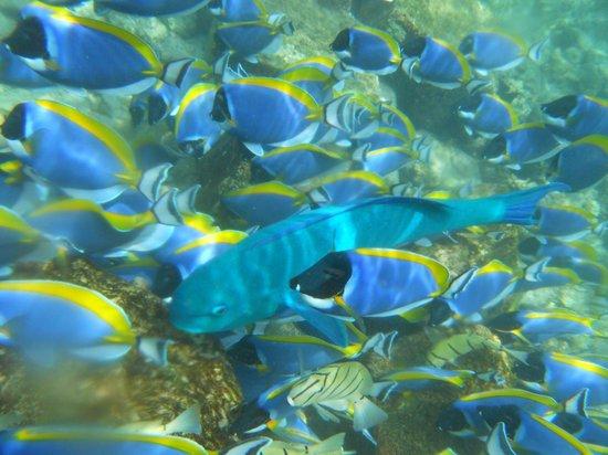 Centara Grand Island Resort & Spa Maldives : Snorkeling à proximité de la piscine de l'hôtel