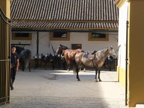 Fundación Real Escuela Andaluza del Arte Ecuestre : getting ready for the show