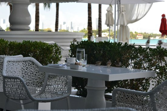 Mondrian South Beach Hotel Outside Breakfast Tables Cute Little Birs To Keep You Company