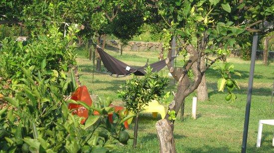B&B Villa Maria Giovanna : giardino meraviglioso