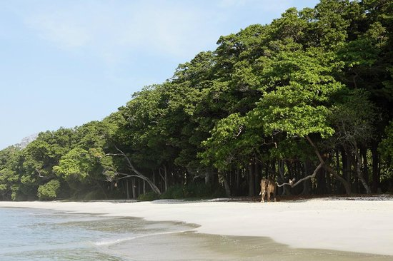 Barefoot at Havelock: Unmatched beach and forests