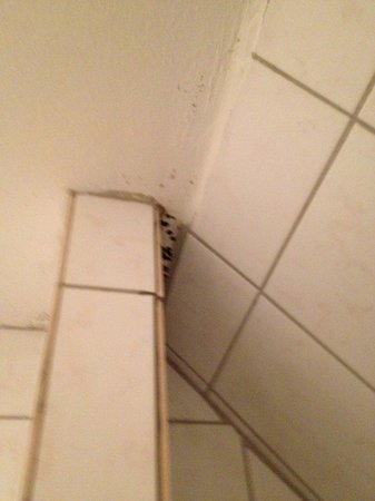 Thorbecke Hotel: Mold in the Bathroom...