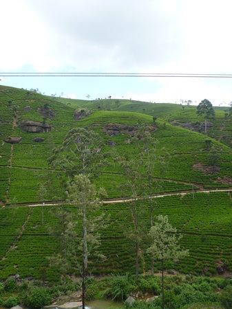 Macwood Tea Factory: вид со смотровой площадки