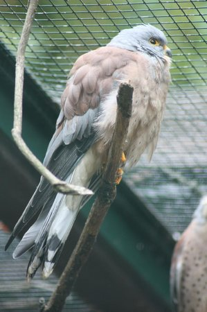 Weltvogelpark Walsrode: Fotoparadies!
