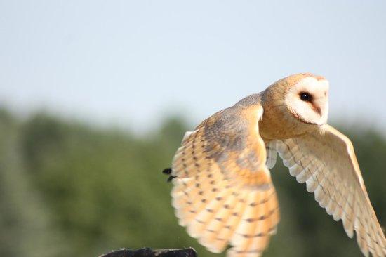 Weltvogelpark Walsrode: Flugshow