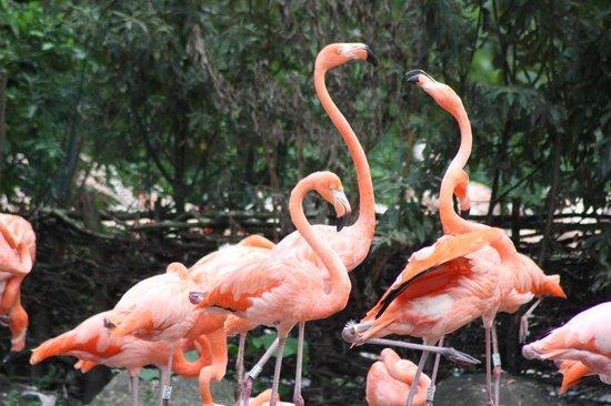 Weltvogelpark Walsrode: Viele Flamingos