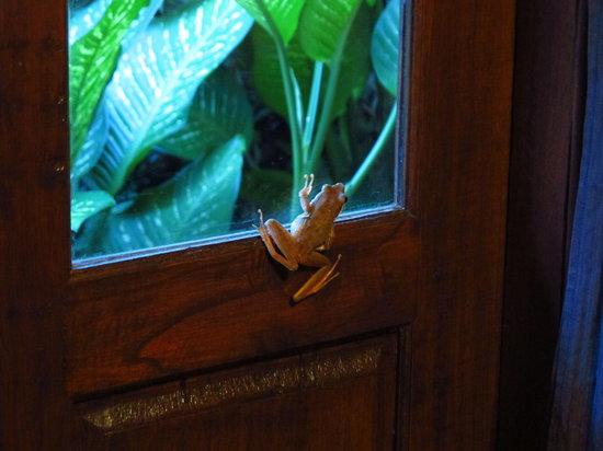 Bali Mountain Retreat: Froggy Welcome