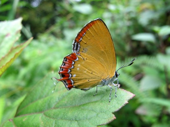 Kopila The Nature Home : nature is beautiful
