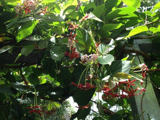 Terra Botanica : pavillon tropical