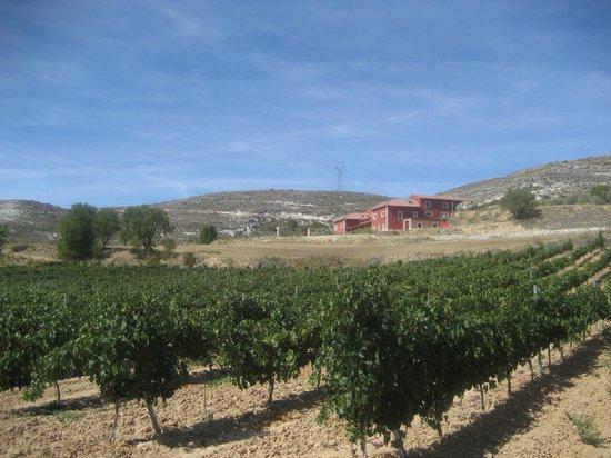 Bodegas y Vinedos Senorio de Bocos