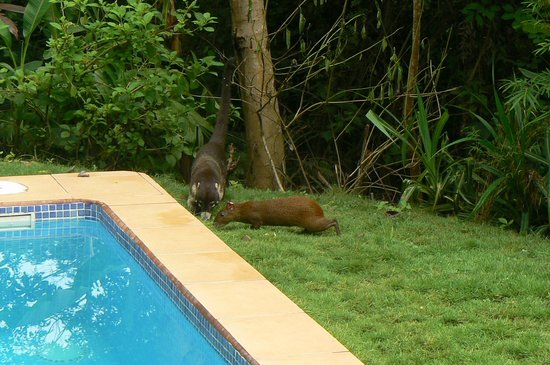Agua Vista: wildlife near the private pool