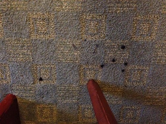 SpringHill Suites Chicago O'Hare : Carpet stains in room