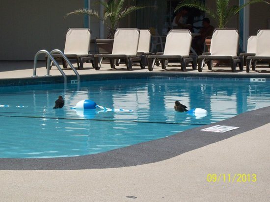 Oceanfront Litchfield Inn : This picture of the pool area shows that even the birds love the pool!  LOL