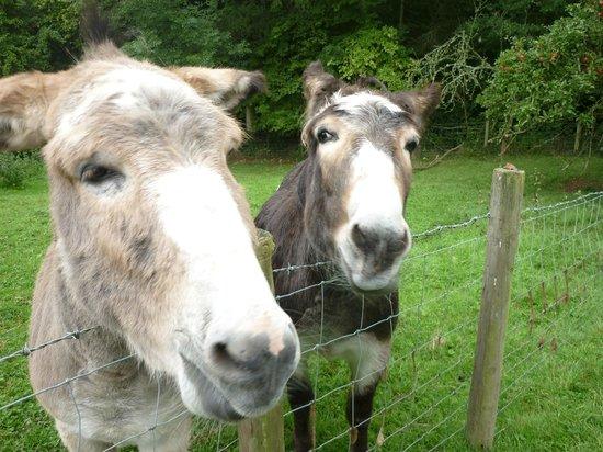 Brook Farm: Donkeys