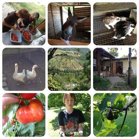 Agriturismo Sant'Ilario sul Farfa: stemningsbilleder