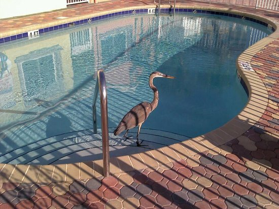 Bay Palms Waterfront Resort - Hotel and Marina: Our friend came to visit us by the pool in the morning.