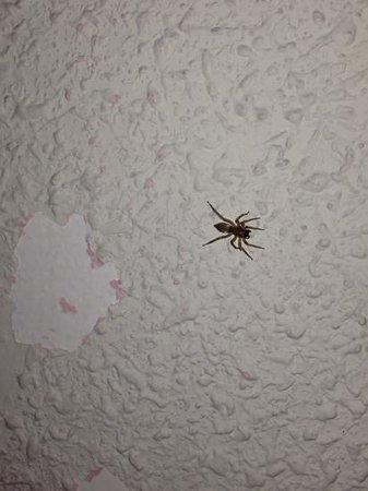 Hotel Solana : diferentes tipos de arañas en las paredes
