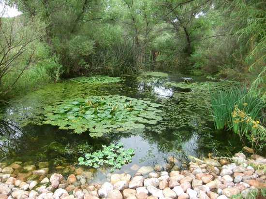 Casa de San Pedro: Pond