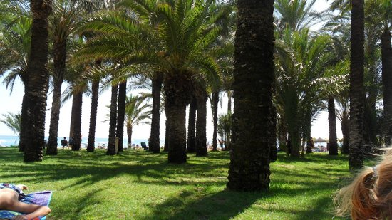 Playa La Carihuela: The lovely grassy oasis along the beach.