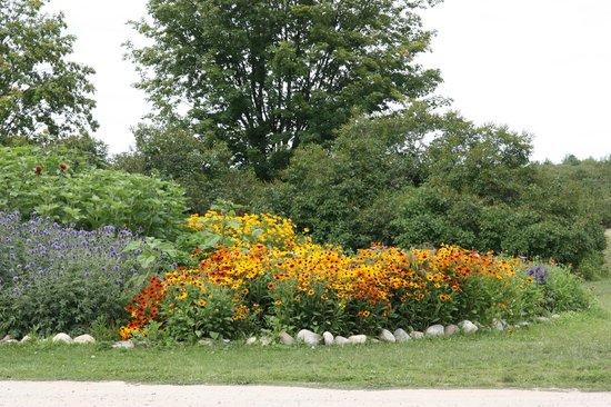 Tandem Cider : Beautiful August Flowers!
