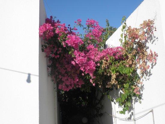Kirki Village: jolie fleur s'épanouissant sous le soleil de la Grèce