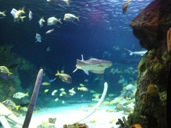 Pretty Pictures To Take Sea Life Kansas City Kansas