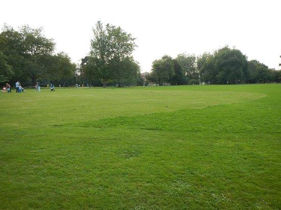 Parque de Ferrera: hierba