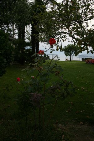 Hotel Brisino: The garden
