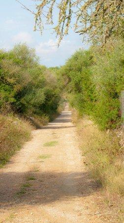 Agroturismo Sa Casa Rotja: country lane for evening walks