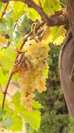 Agroturismo Sa Casa Rotja: Grapevines on the property