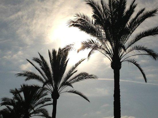 Hotel whala!balmes : Ljuvligt svajande palmer efter strandpromenaden