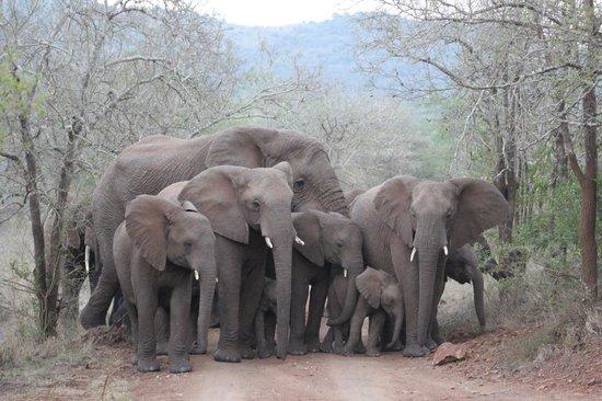 Thanda Safari Lodge: And the elephants came crashing through the trees