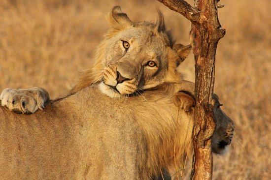 Thanda Safari Lodge: Brotherly love