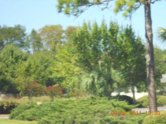 Ocean Creek Resort : Wooded area