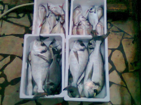Trattoria dal pescatore: guarda e impara