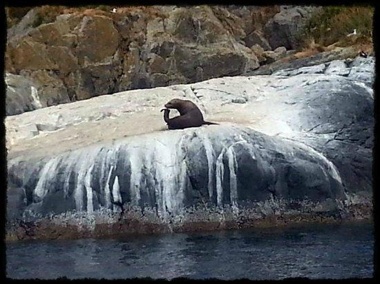 Sun Fun Divers: Sea lion