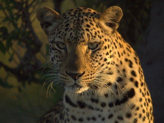 Wilderness Safaris Kings Pool Camp: A close encounter