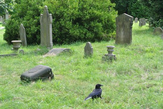 Brompton Cemetery: Parte de la fauna