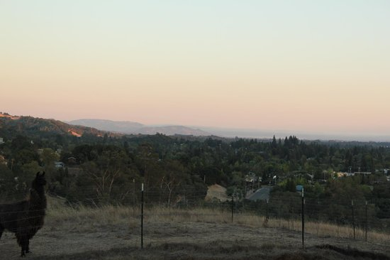 Bella Villa Messina: View from patio