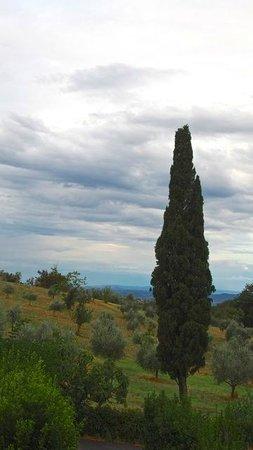 Agriturismo Poggio al Sole: View of the adjacent olive groves.