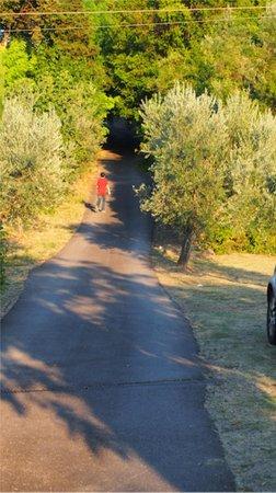 Agriturismo Poggio al Sole: The driveway up to the road and our dinner at La Casa del Prosciutto