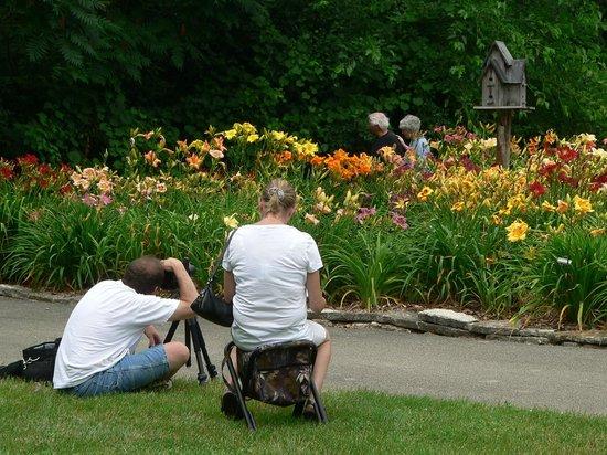 Klehm Arboretum U0026 Botanic Garden: Daylily Garden